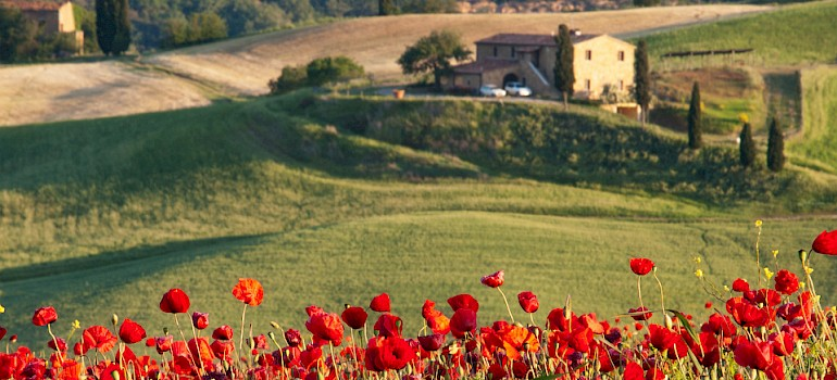 Poppies adorn the fields in Tuscany. Photo via Flickr:Ivan Borisov