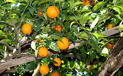 Oranges in Positano - Amalfi Coast, Italy. Flickr:Peter Visser