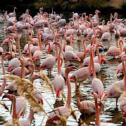 Provenza - La Naturaleza de Camarga Foto