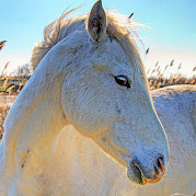 Provence - Wilderness of Camargue Photo