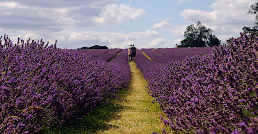 Gotta love the lavender fields in Provence, France. Photo via Flickr:juneuk83