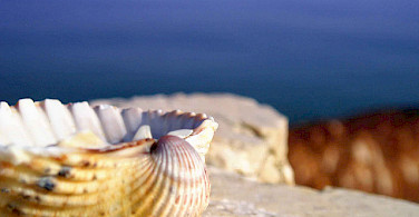 Seashell in Rimini, Italy. Photo via Flickr:Francesco Z