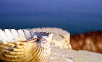 Seashell in Rimini, Italy. Photo via Flickr:Francesco Z
