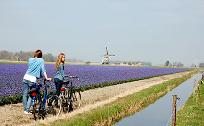 Quiet flat bike paths past lots of windmills in the Polderland of Holland. Photo courtesy of the Netherlands Board of Tourism