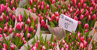 Tulips for sale in Amsterdam. Photo via Flickr:ehtanlindsey