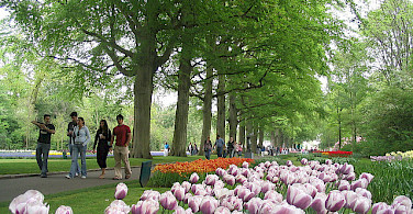 Walking through the Keukenhof, the Netherlands. Photo via Flickr:dbaron