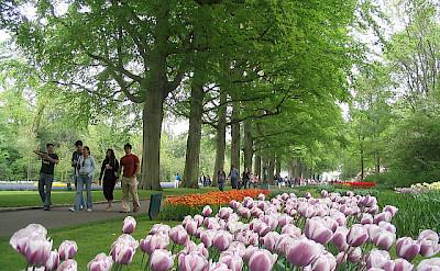 Walking through the Keukenhof, the Netherlands. Photo via Flickr:dbaron