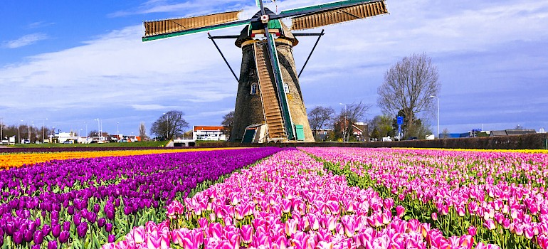 Super Tulip Tour