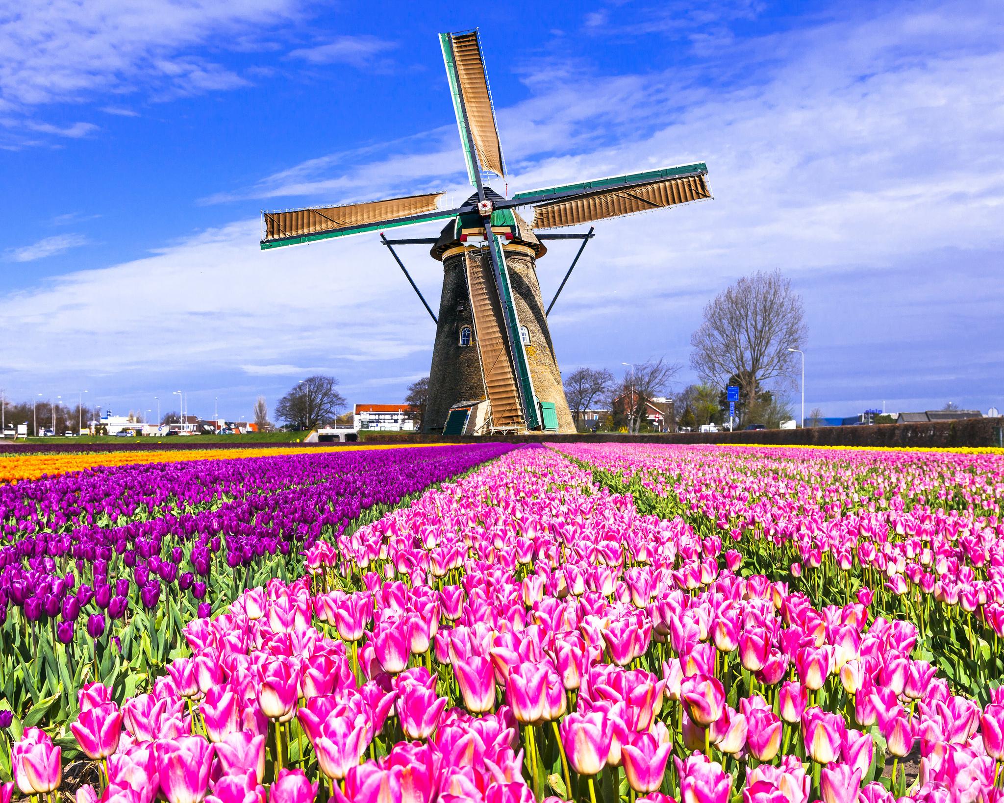 super tulip bike and barge tour netherlands tripsite. Black Bedroom Furniture Sets. Home Design Ideas
