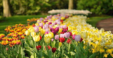 Keukenhof flowers, Lisse, South Holland. Photo via Flickr:gnuckx