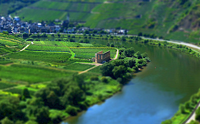 Vineyards along the Mosel River in Cochem, Germany. Flickr:chubbyhomer