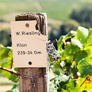 Riesling wine is famous around the Mosel River region in Germany. Flickr:mhagemann