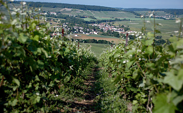 Champagne region near Epernay, France. Photo via Flickr:Pug Girl