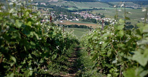 Champagne region near Epernay, France. Flickr:Pug Girl