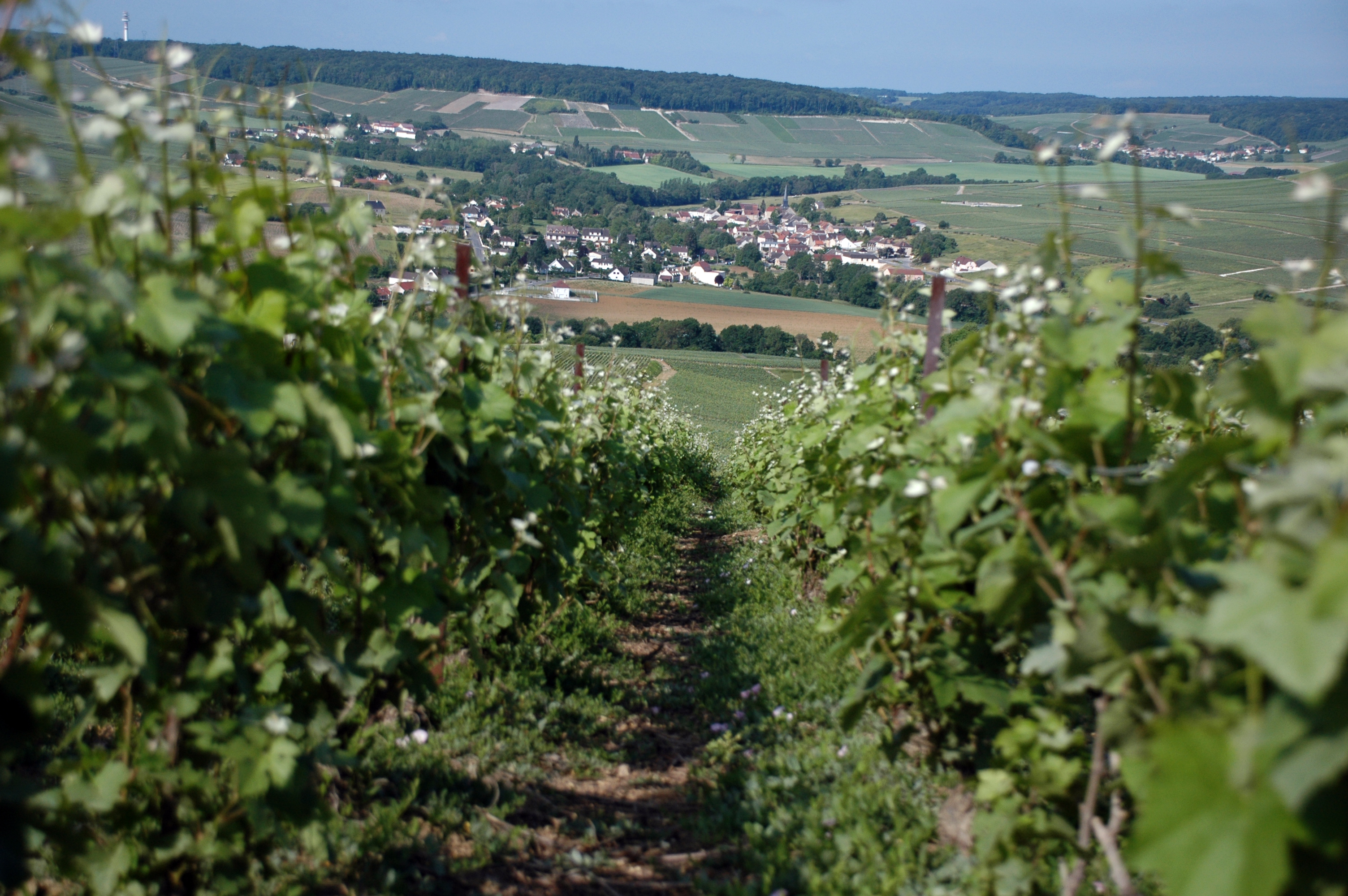 Champagne bike and barge tour france tripsite for Champagne region in france