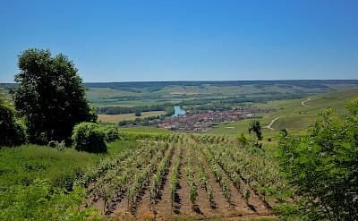 Champagne region near Epernay, France. Flickr:Random_fotos