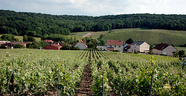 Vineyards throughout the Champagne region. Photo via Flickr:Pug Girl
