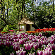Keukenhof, near Lisse in the Netherlands. Photo via Netherlands Board of Tourism