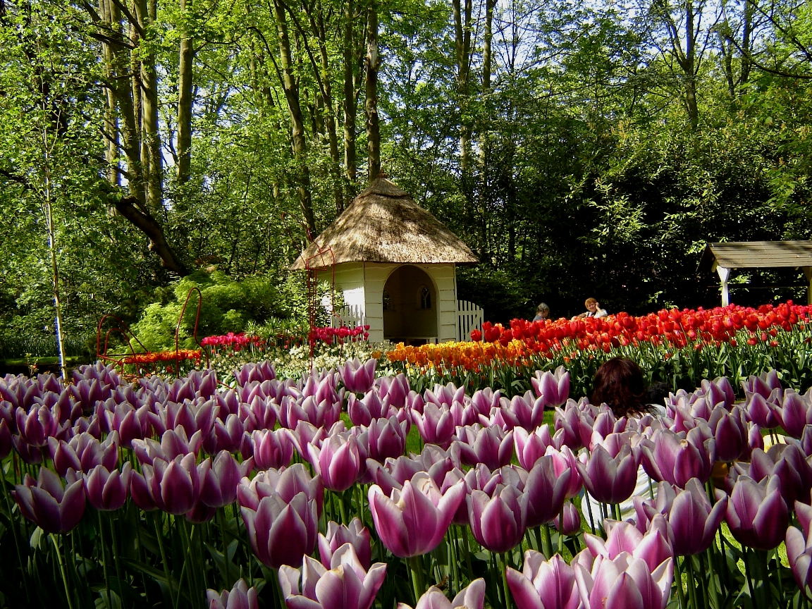 5 Day Tulip Bike And Barge Tour Netherlands Tripsite