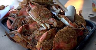Maryland's famous crabs - a huge Eastern Shore treat! Photo via Flickr:scaredy_kat