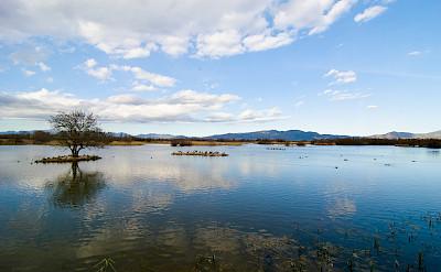 Aiguamoll Bird Santuary, Catalonia, Spain. Photo via Flickrmingusmutter
