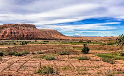 Farmland in Ouarzazate, Morocco. Flickr:Steven dosRemedios