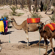 Aventura em Marrocos Foto