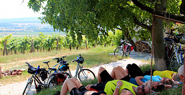 Bike break treeside on the Lake Balaton Hungary Bike Tour.
