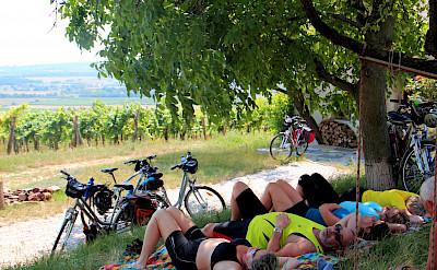 Bike break treeside on the Lake Balaton Hungary Bike Tour.