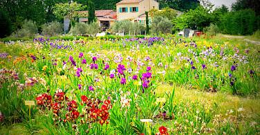 Local chateau. Photo via Flickr:provenza