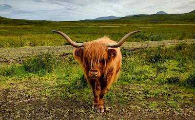The King of the land - the Highland himself! Flickr:Jean Balczesak