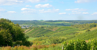 Vineyards overflowing in Remich, Luxembourg. Flickr:Tristan Schmurr