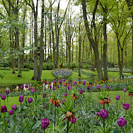 Keukenhof, Lisse, the Netherlands. Photo via Flickr:Olga
