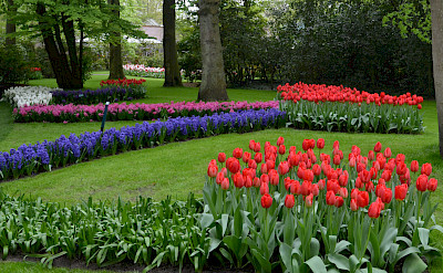 More tulips at the Keukenhof, Lisse, the Netherlands. Photo via Flickr:Olga
