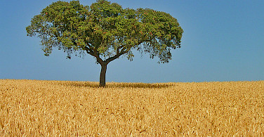 Alentejo region in Portugal. Photo via Flickr:melenama