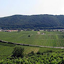 Vineyards adorn the Wachau region in Austria. Wikimedia Commons:Lonezor