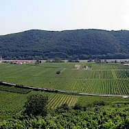 Vineyards adorn the Wachau region in Austria. Photo via Wikimedia Commons:Lonezor