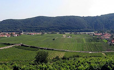 Vineyards adorn the Wachau region in Austria. CC:Lonezor