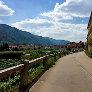 Quiet roads along vineyards in the Wachau Valley. Photo by Elena.