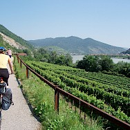 Cycling along the Wachau Valley vineyards on the Danube. Photo via Flickr:MuntyPix