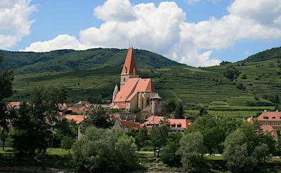 Wachau region known for its apricots and grapes - used to make wines and liquors! Photo via Flickr:jay8085