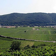 Vineyards adorn the Wachau region of Austria. Photo via Wikimedia Commons:Lonezor
