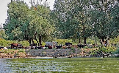 On the Danube Delta Bike Tour in Romania. Photo via TO