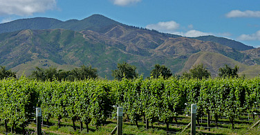 St. Clair Family Estate that you'll visit on Day 4. Photo via Flickr:Mafue