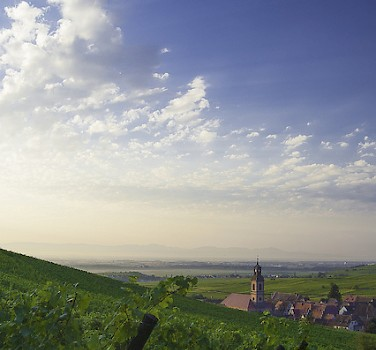 Cycling towards Riquewihr, France. Photo via Flickr:phillippe baumgart