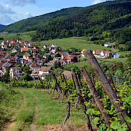 Vineyards surrounding Riquewihr, Alsace, France. Photo via Flickr:Pug Girl