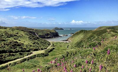 Gorgeous landscapes dot Pembrokeshire. Photo via Flickr:David