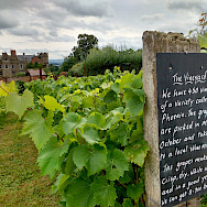 Vineyard at Crost Castle, Yarpole, Herefordshire, England. Photo via TO
