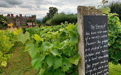 Vineyard at Crost Castle, Yarpole, Herefordshire, England. Photo via TO