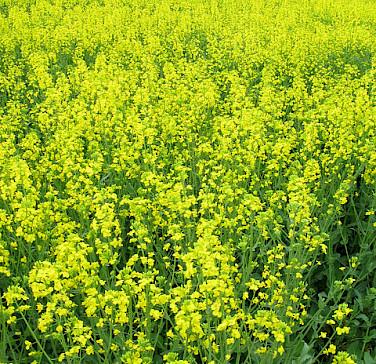 Ruhr Valley in bloom!Photo via Flickr:Eichental